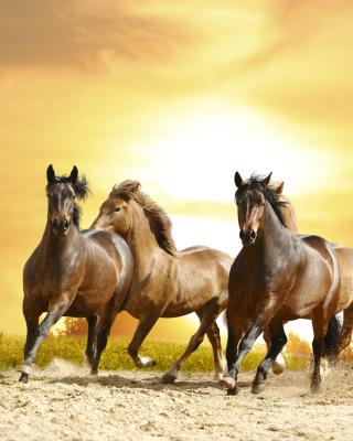 A background information of preston horse