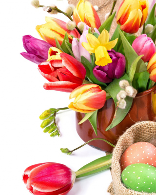 Freshness Tulips Wallpaper for Nokia Asha 310