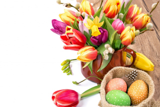 Freshness Tulips Wallpaper for 220x176