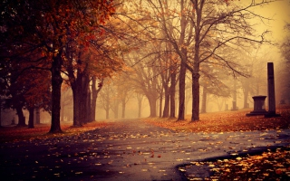 Park In Autumn Background for Android, iPhone and iPad