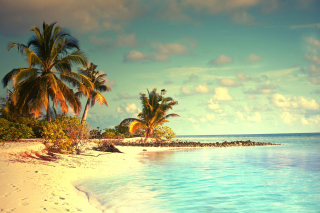 Kostenloses Tropical Ocean Vacation Wallpaper für Android, iPhone und iPad