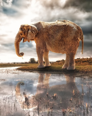 Fantasy Elephant and Giraffe Background for Nokia X1-01