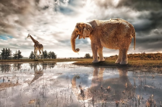 Fantasy Elephant and Giraffe Picture for Android, iPhone and iPad