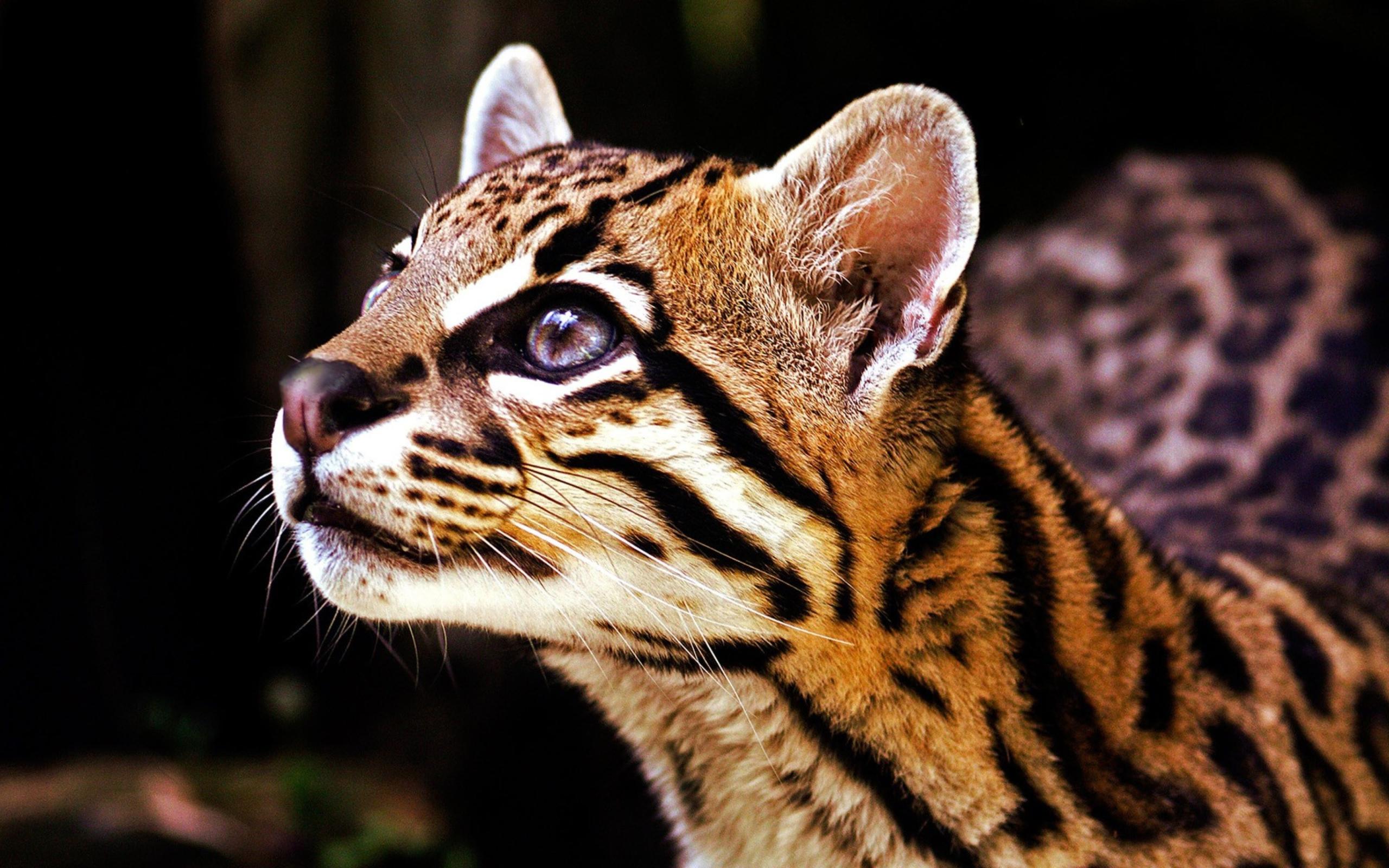 частном доме, самые лучшие фото диких кошек они спасут жизнь