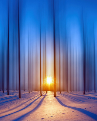 Snow Forest Background for 240x320