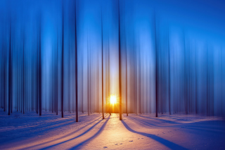 Free Snow Forest Picture for 1366x768