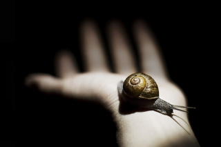 Snail On Hand Picture for Android, iPhone and iPad
