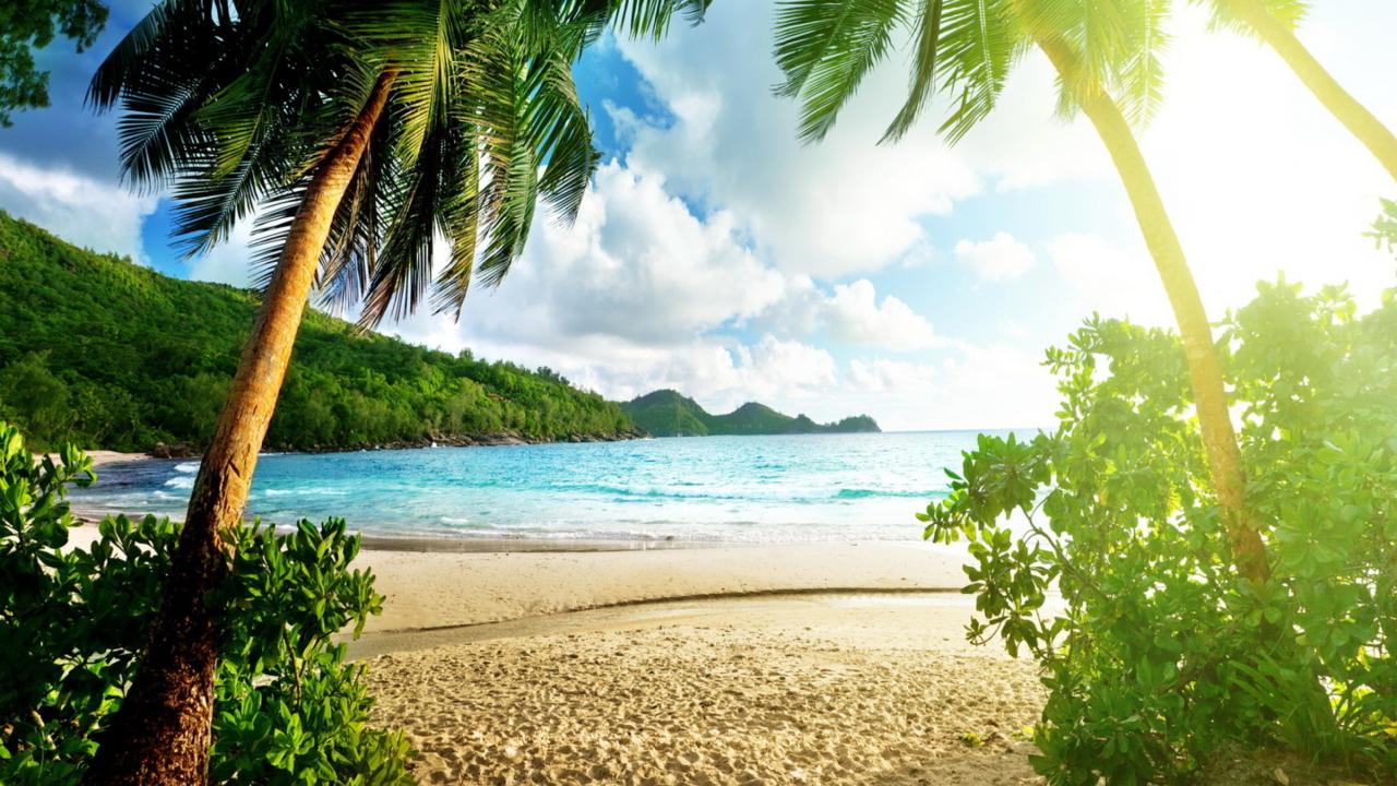 Tropical Beach In Palau