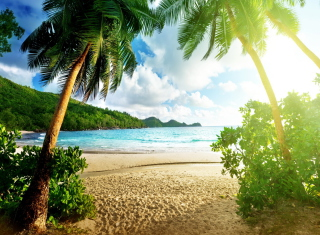 Tropical Beach In Palau Picture for Android, iPhone and iPad