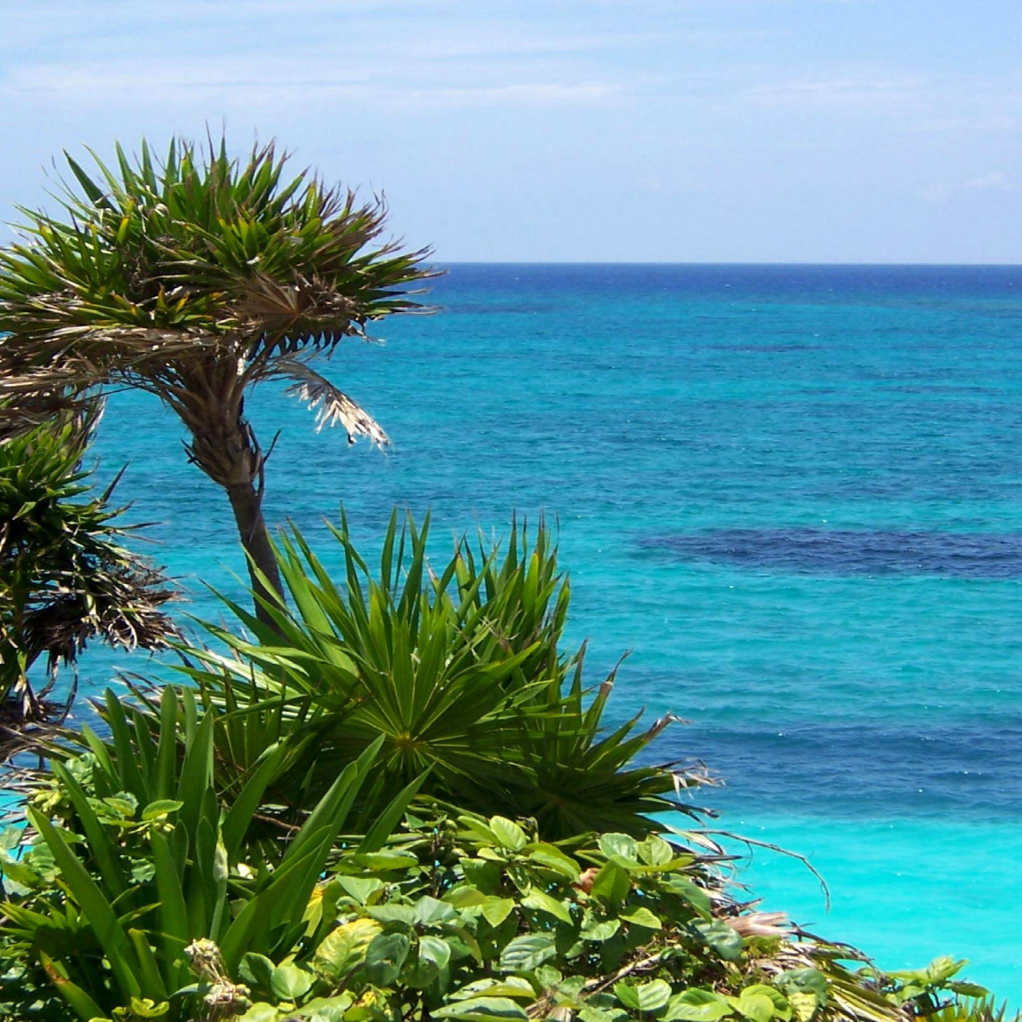 море, пляж, растительность без смс