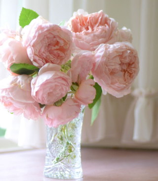 Soft Pink Peonies Bouquet Background for Nokia X6