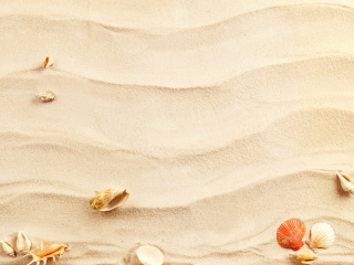 Screenshot №1 pro téma Sand and Shells 320x240