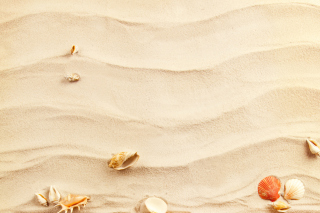 Free Sand and Shells Picture for Android, iPhone and iPad