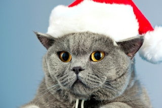 Santa's Cat Background for Android, iPhone and iPad