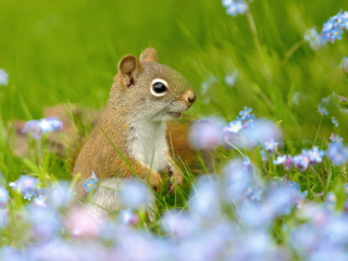 Screenshot №1 pro téma Funny Squirrel In Field 320x240