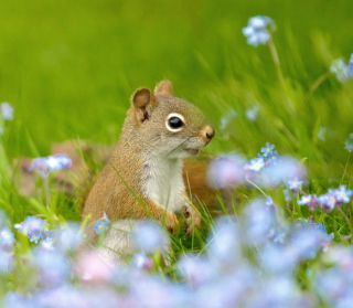 Funny Squirrel In Field sfondi gratuiti per 128x128
