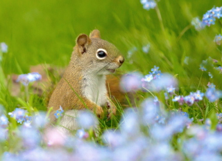 Funny Squirrel In Field Background for Android, iPhone and iPad