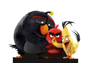 Angry Birds the Movie 2016 - Obrázkek zdarma pro Samsung I9080 Galaxy Grand
