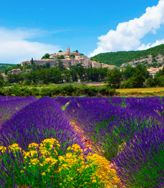 Lavender Field In Provence France Picture for 240x320