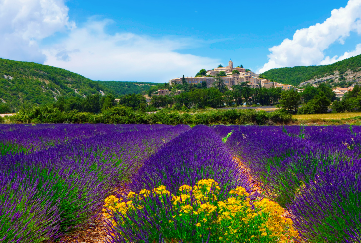 Lavender Field In Provence France wallpaper