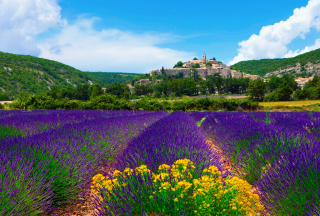 Lavender Field In Provence France Background for Android, iPhone and iPad