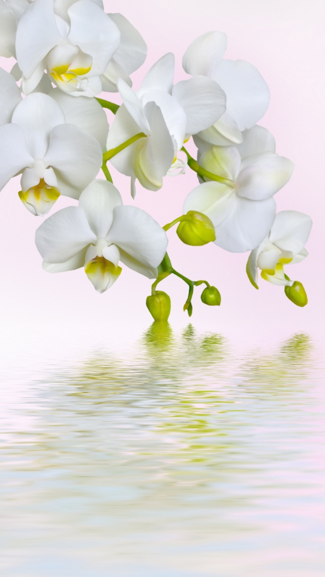 Screenshot №1 pro téma White Orchids 640x1136