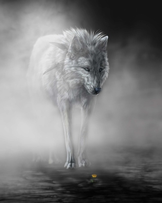 Lonely Wolf Picture for iPhone 4S