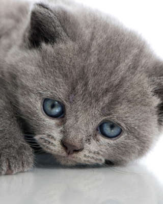 Free Melancholic blue eyed cat Picture for HTC Titan