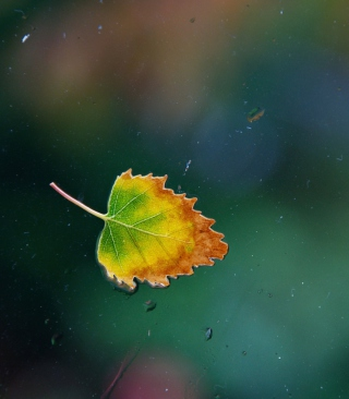 Lonely Autumn Leaf Background for Nokia Asha 308