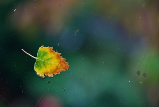 Lonely Autumn Leaf Wallpaper for 1280x800