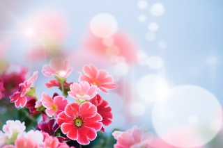 Bokeh Bright Flowers Picture for Android, iPhone and iPad