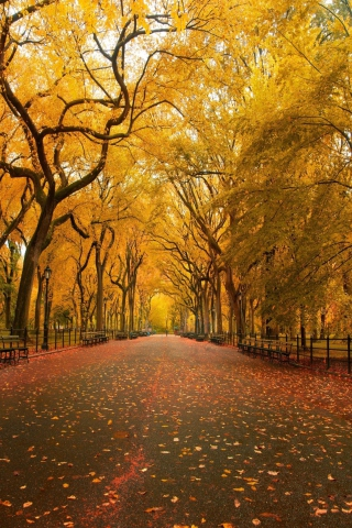 Autumn Way para Huawei G7300
