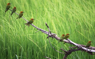 Free Green Birds On Branch Picture for Android, iPhone and iPad