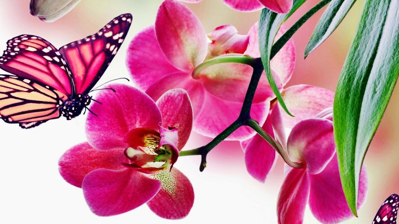 Орхидеи картинка на заставку