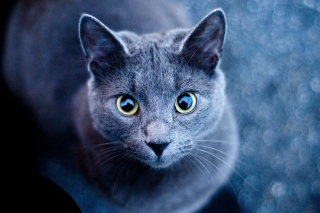 Cats Look Wallpaper for Android, iPhone and iPad