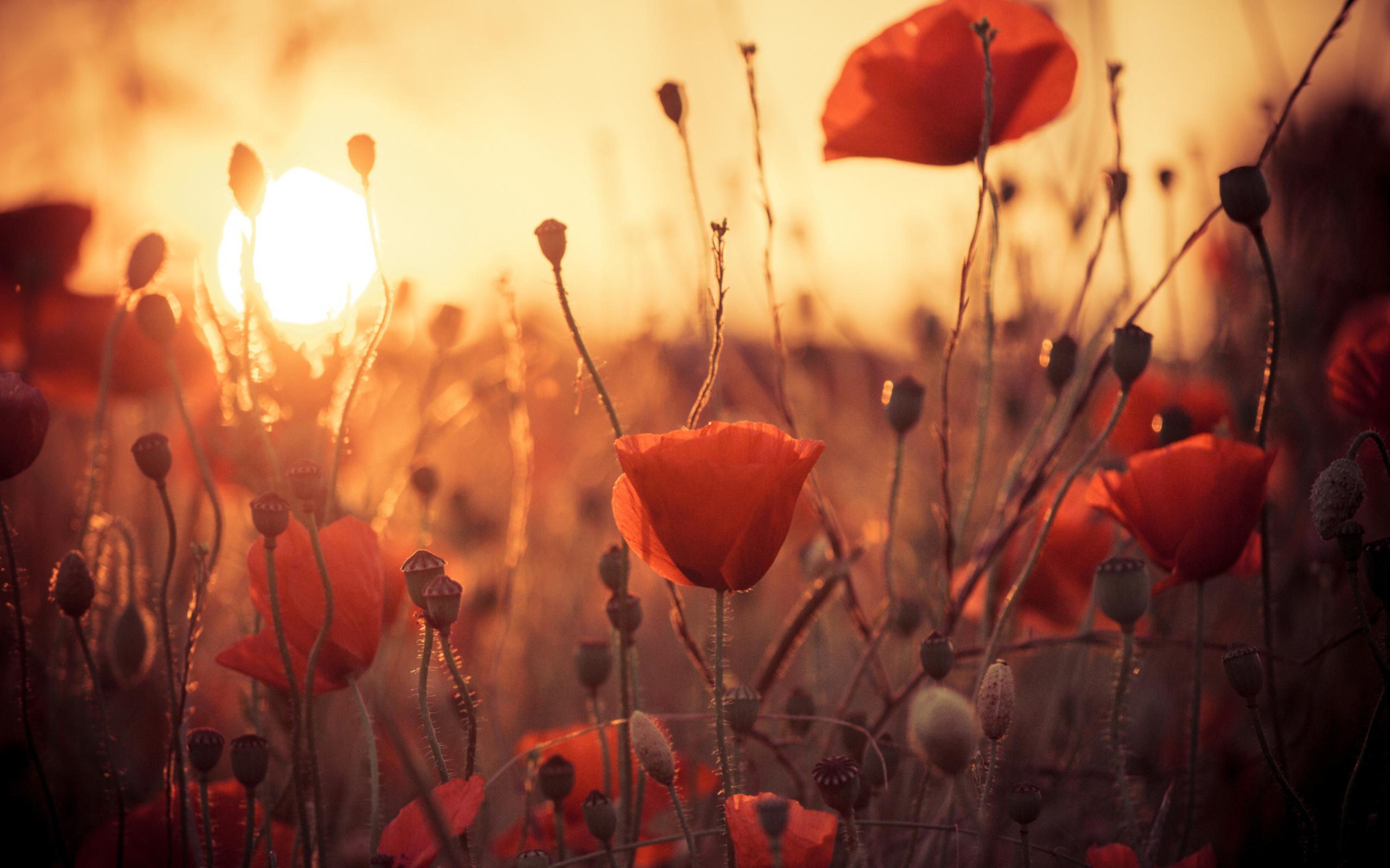 одинокий цветочек на закате загрузить