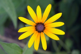 Bright Yellow Flower sfondi gratuiti per cellulari Android, iPhone, iPad e desktop