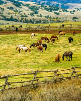 Fields with horses sfondi gratuiti per iPhone 6 Plus