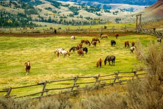 Fields with horses Background for Android, iPhone and iPad