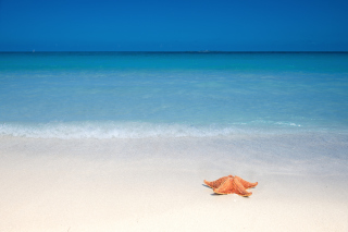 Starfish Sunbathing sfondi gratuiti per cellulari Android, iPhone, iPad e desktop
