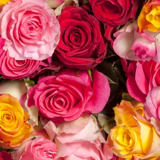 Colorful Roses 5k sfondi gratuiti per iPad Air