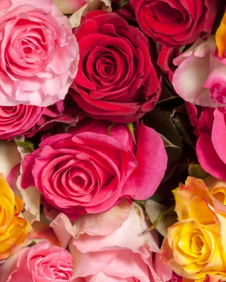 Colorful Roses 5k Background for HTC Titan