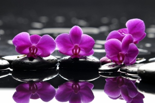 Spa Purple Flowers Wallpaper for Android, iPhone and iPad