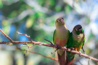 Two Beautiful Green Parrots Background for Android, iPhone and iPad