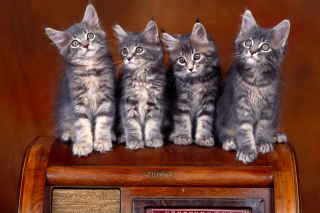 Sweet Kittens Background for Android, iPhone and iPad