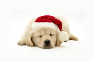 Christmas Dog Background for Android, iPhone and iPad