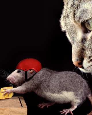 Cat, mouse and mousetrap Wallpaper for Nokia C1-01