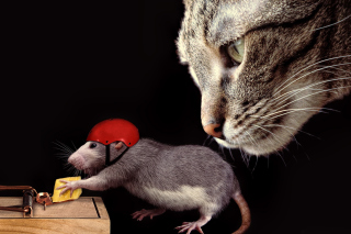 Cat, mouse and mousetrap Wallpaper for Android, iPhone and iPad