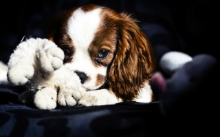 Cute Sad Puppy Wallpaper for Android, iPhone and iPad