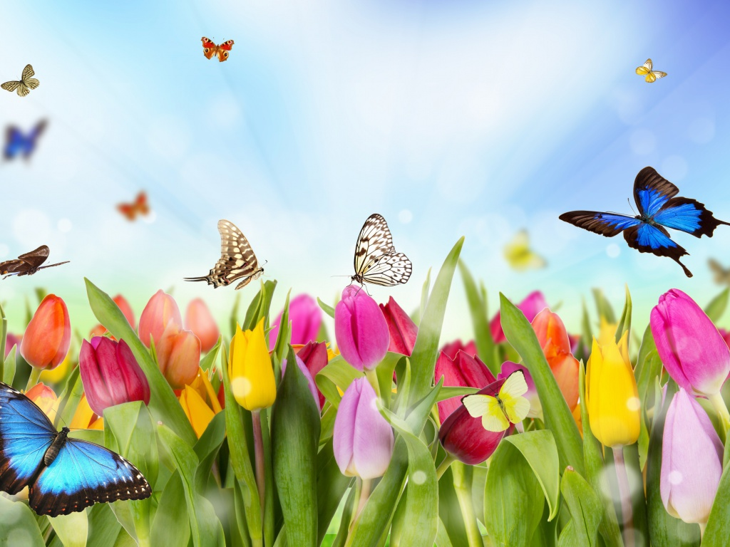 Screenshot №1 pro téma Butterflies and Tulip Field 1024x768